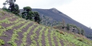 Fuencaliente, Gemeinde umgeben von Vulkanen :: Fuencaliente, municipio de vino entre volcanes