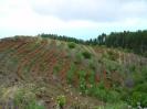 Unterbereich Norden von La Palma :: Subzona Norte